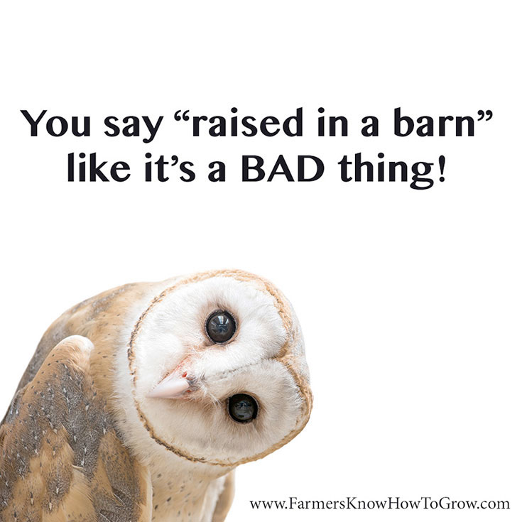 Raised in a Barn Quote