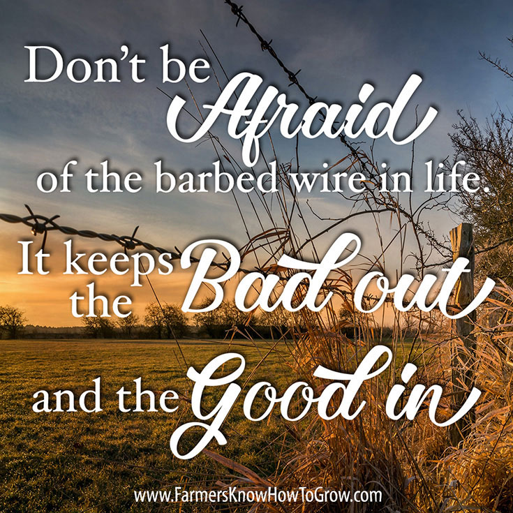 Quote about Barbed Wire