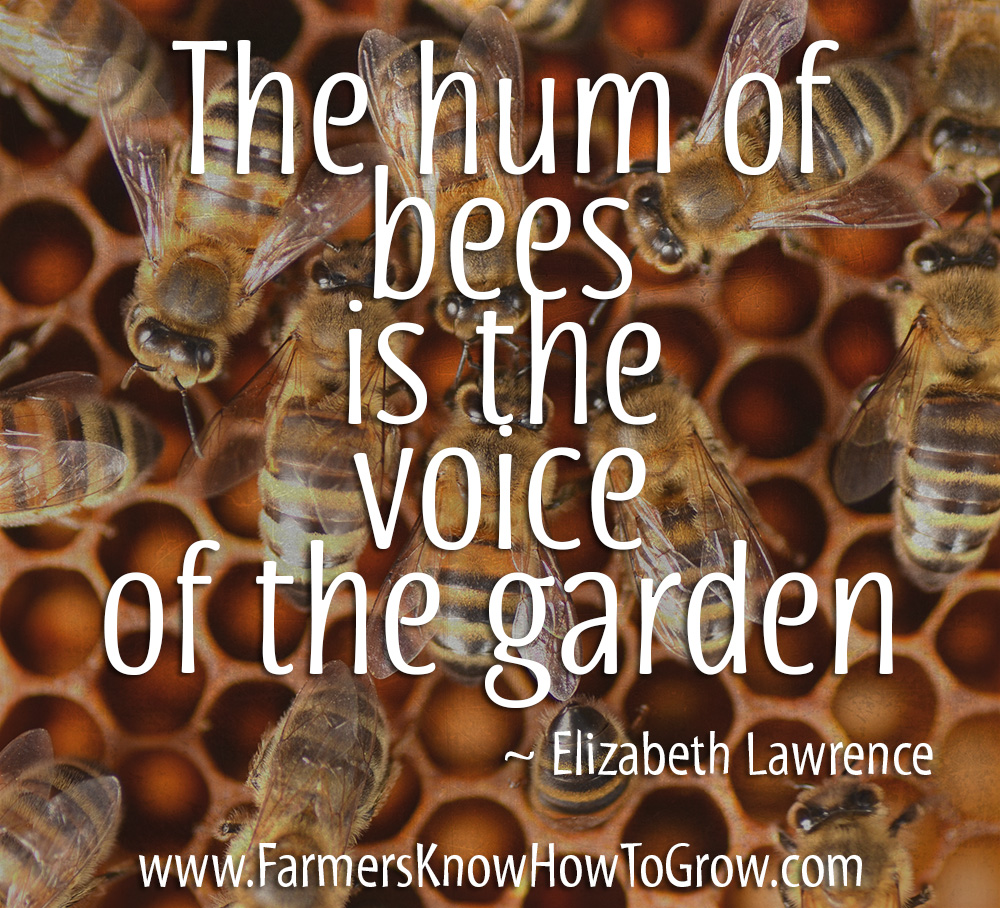 Elizabeth Lawrence Quote