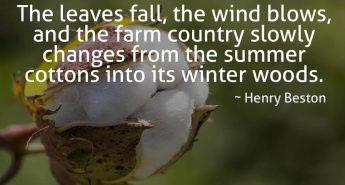 Henry Beston Quote