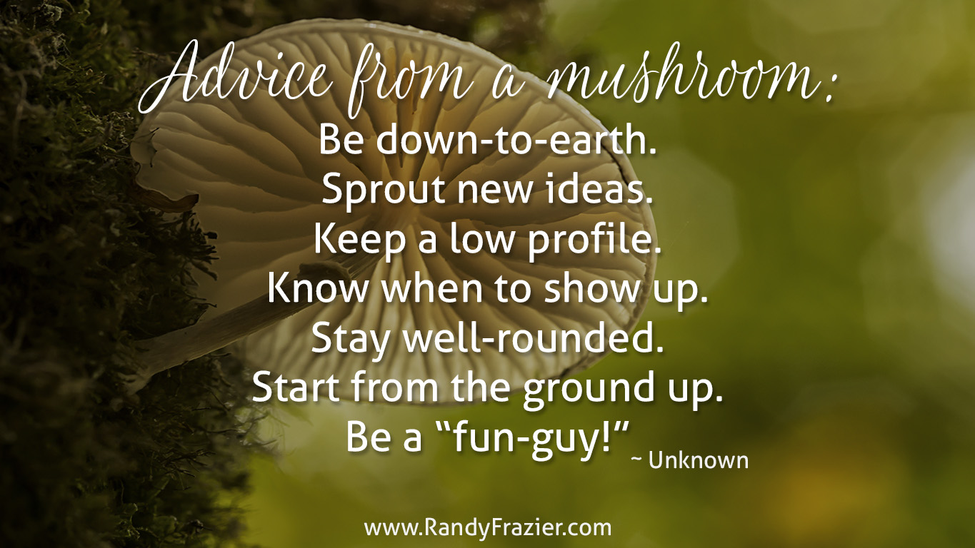 Advice from a Mushroom