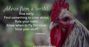 Advice from a Rooster