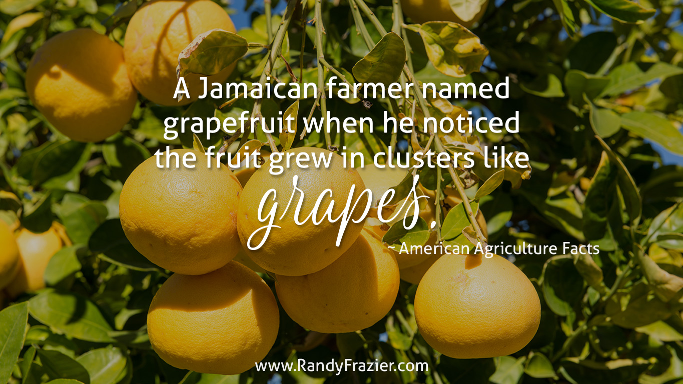 Ag Facts about Grapefruit