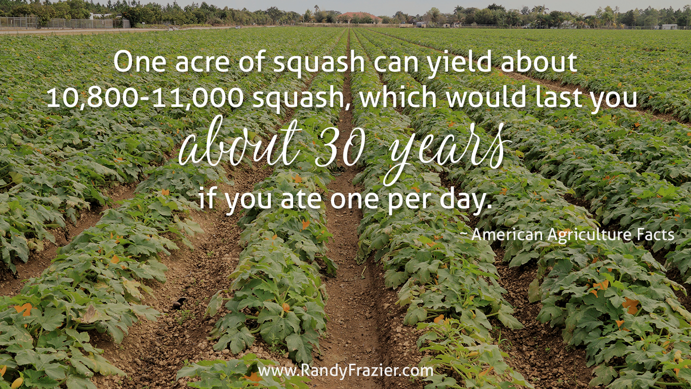 Ag Facts about Squash