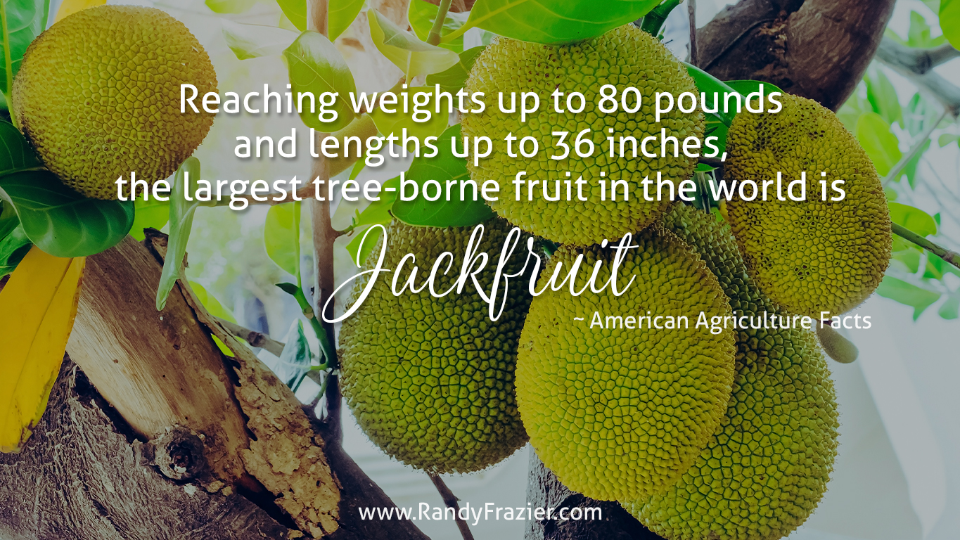 Ag Facts about Jackfruit