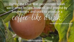 Ag Facts about Persimmons