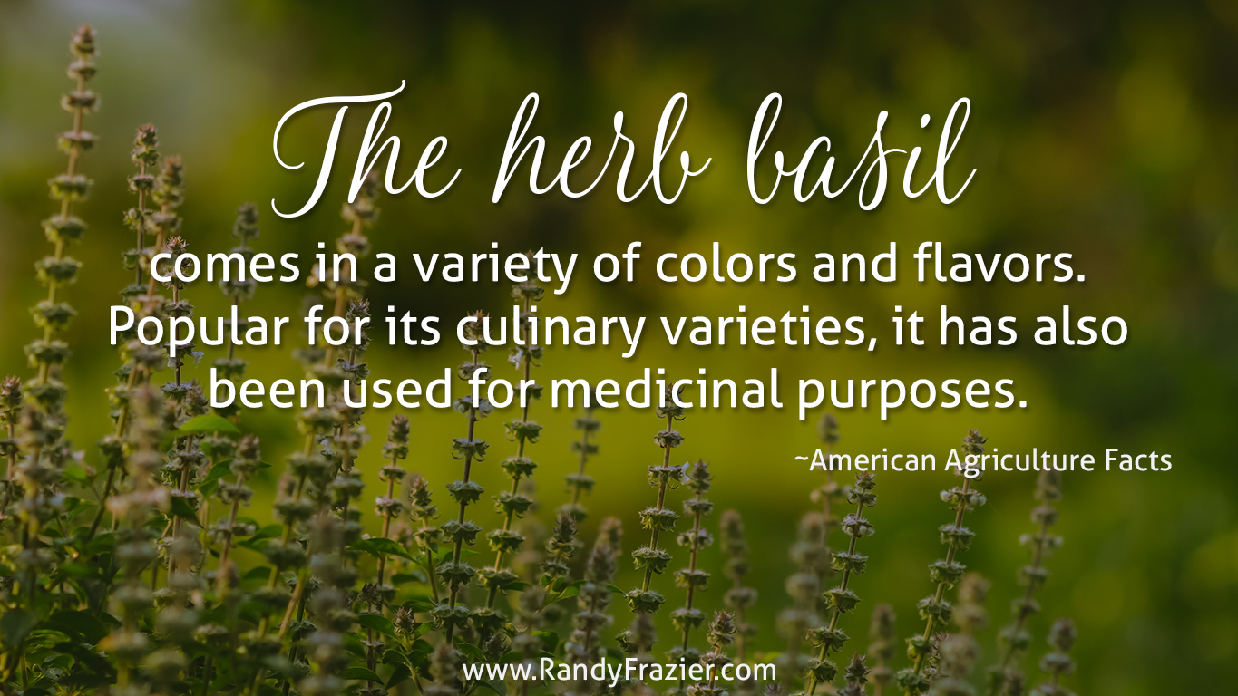 Ag Facts about Basil