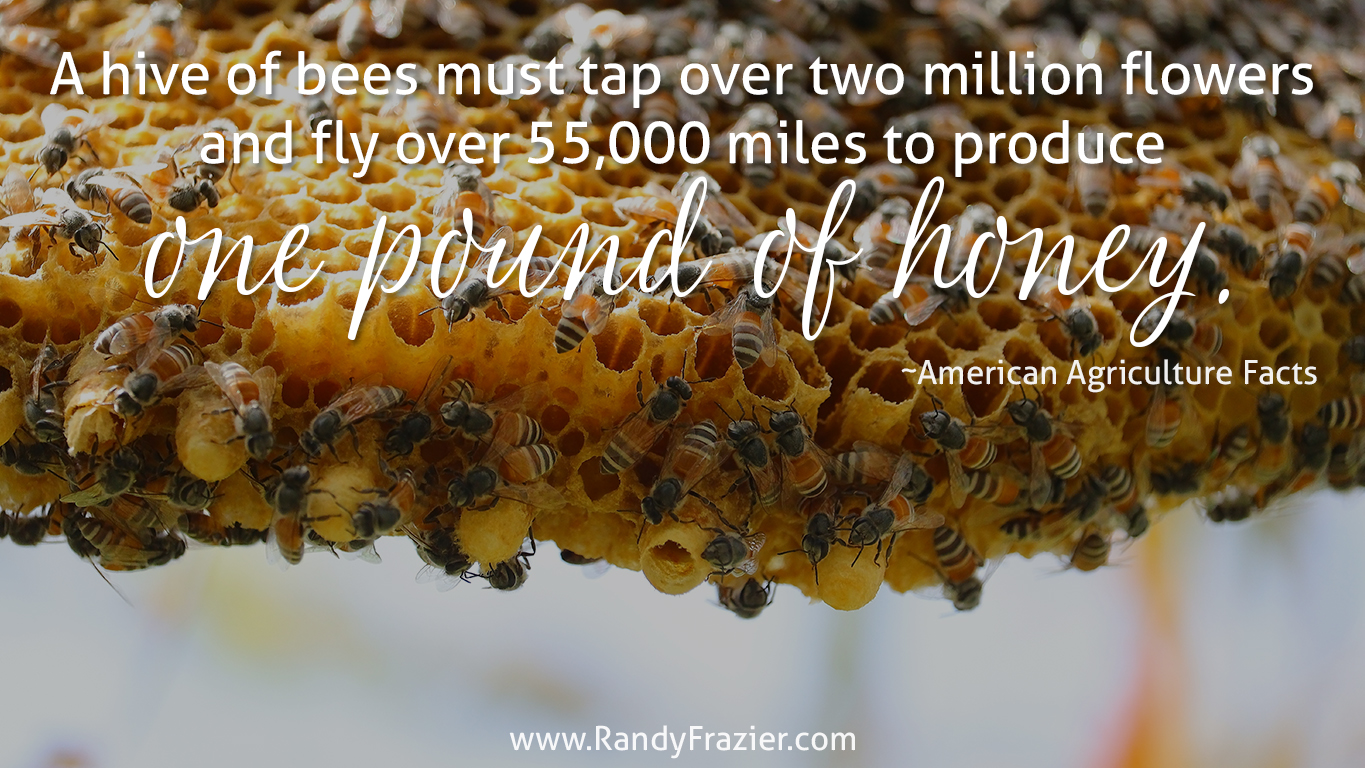 Ag Facts about Honeybees