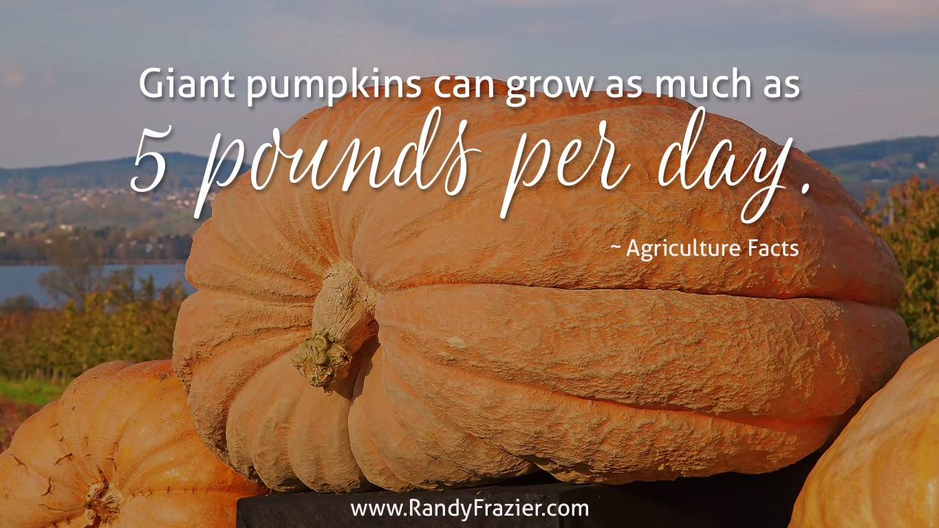 Ag Facts about Giant Pumpkins