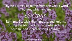 Ag Facts about Thyme