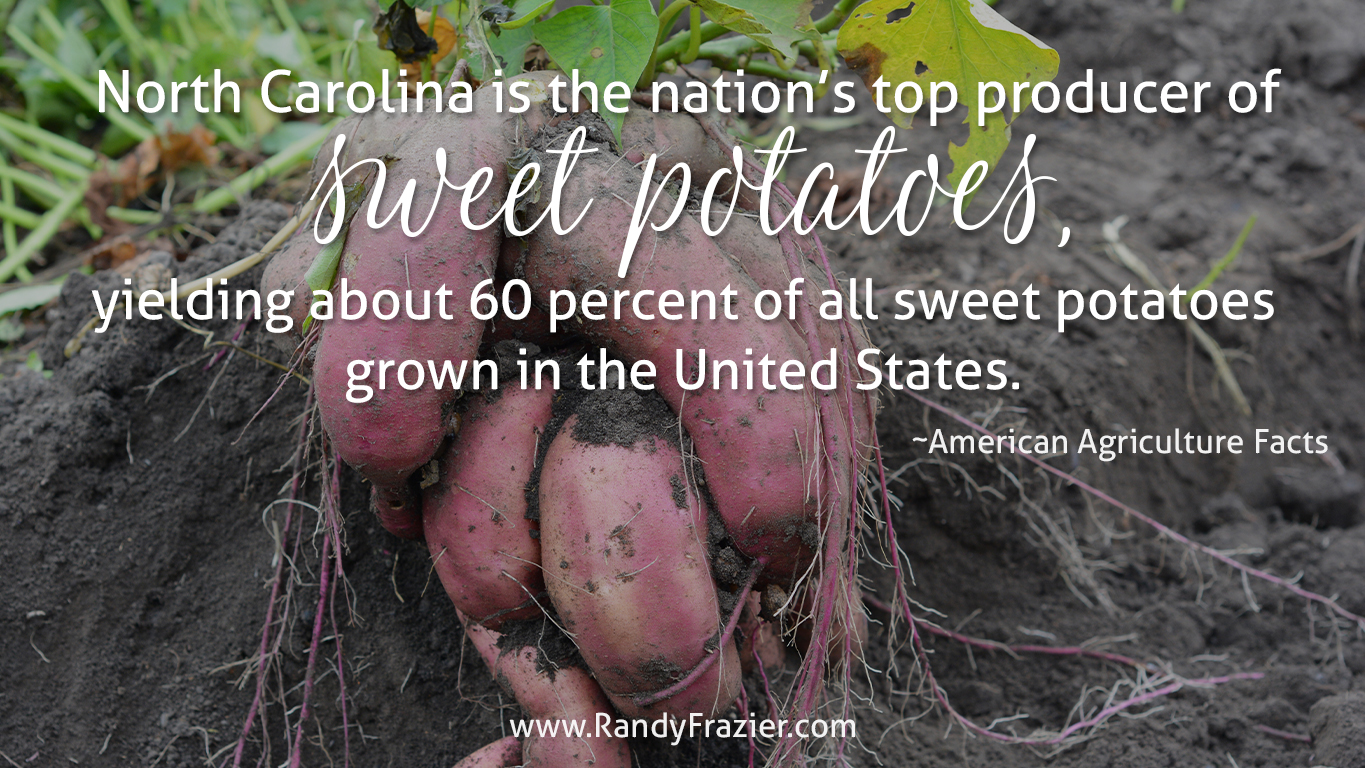 Ag Facts about Sweet Potatoes