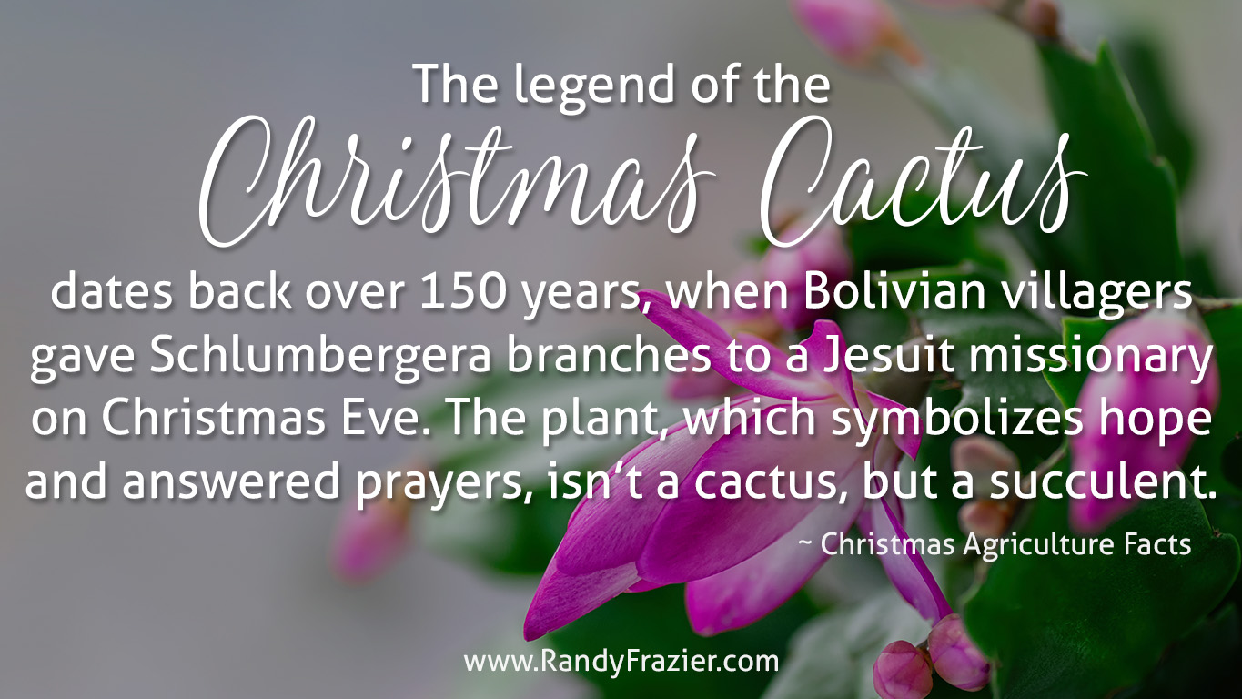 Ag Facts about the Christmas Cactus