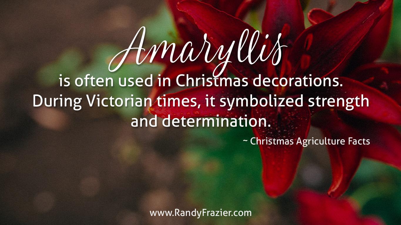 Christmas Ag Facts: Amaryllis