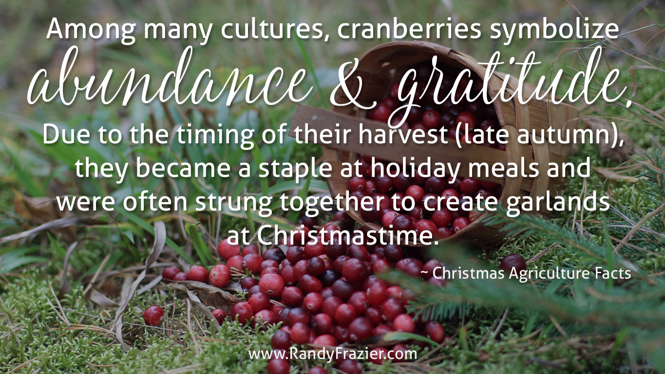 Christmas Ag Facts: Cranberries