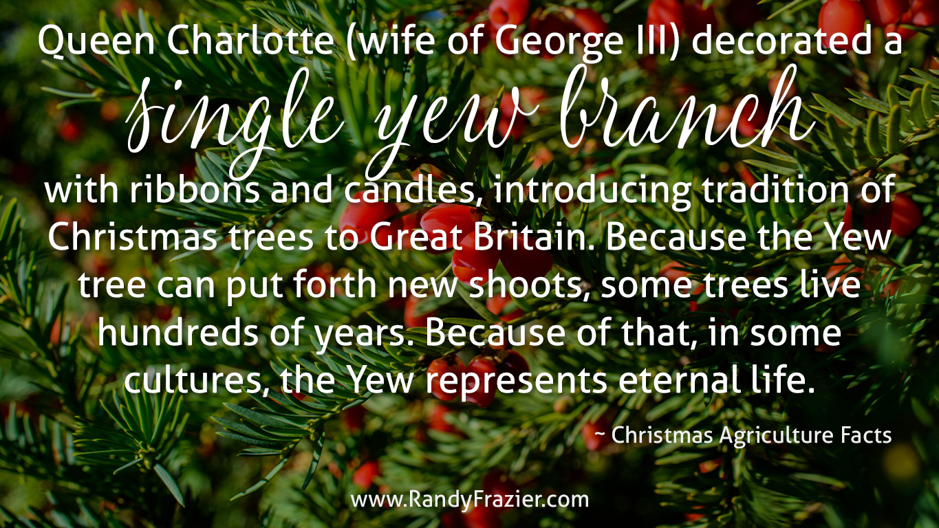 Christmas Ag Facts: Yew Trees