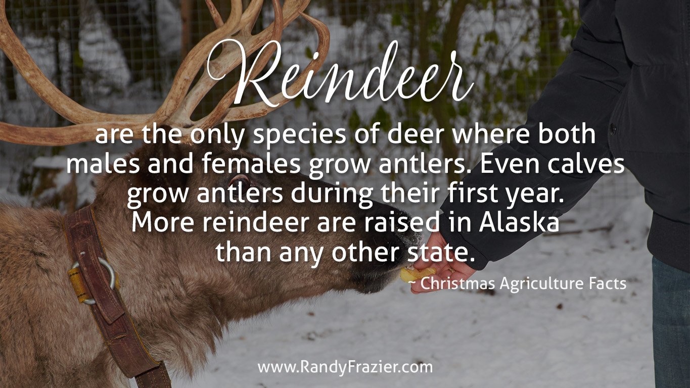 Christmas Ag Facts: Reindeer