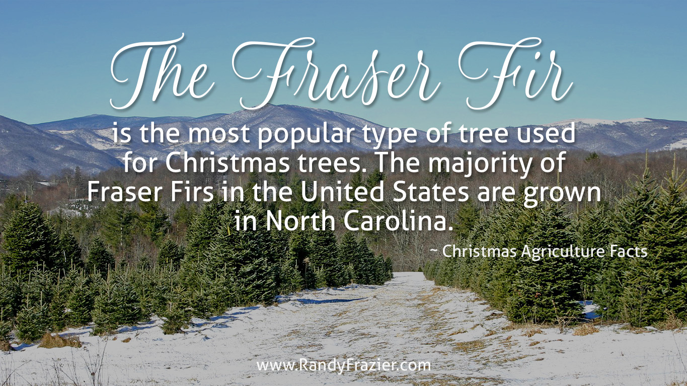 Christmas Ag Facts: Fraser Firs