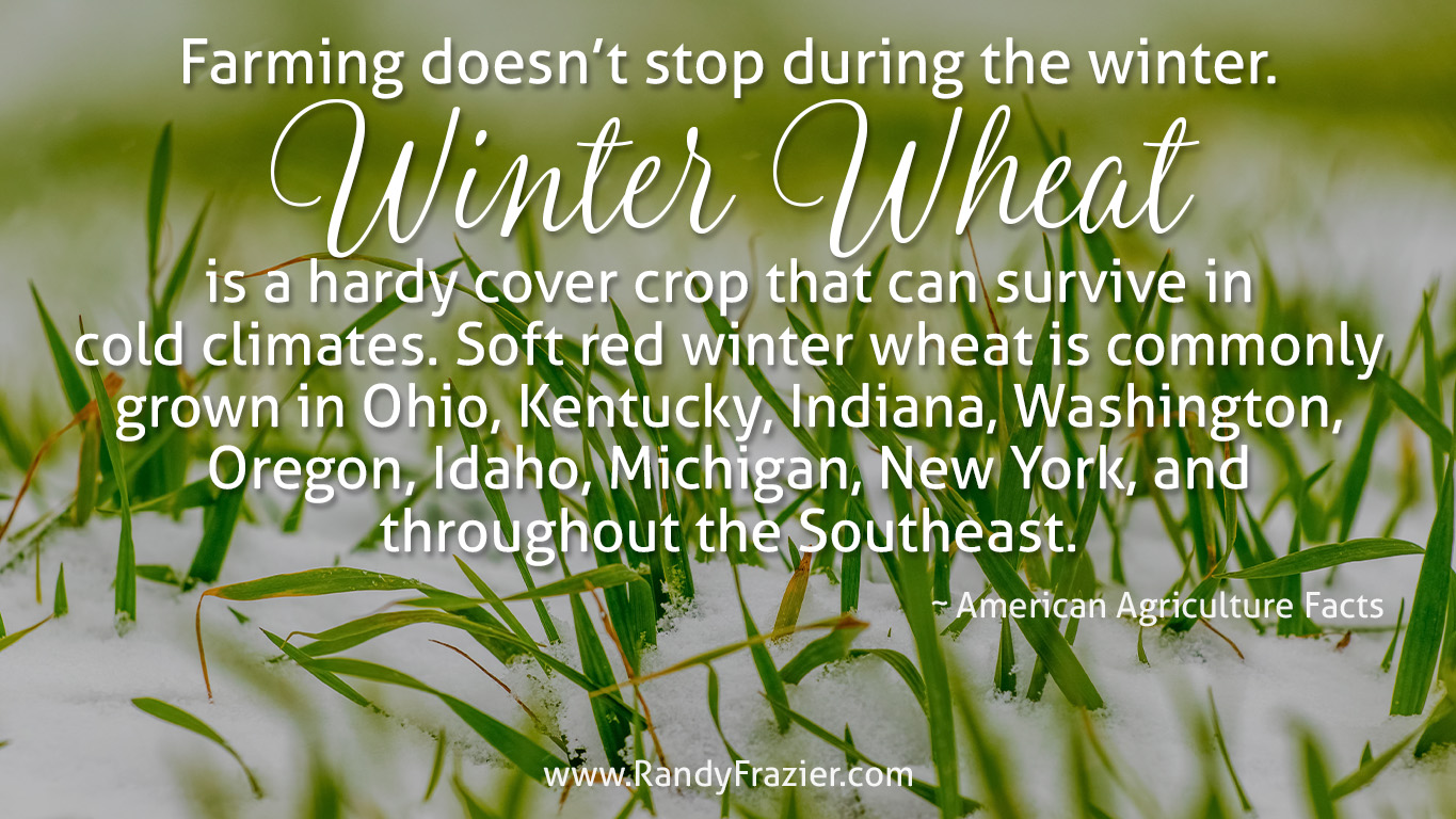 Ag Facts about Soft Red Winter Wheat